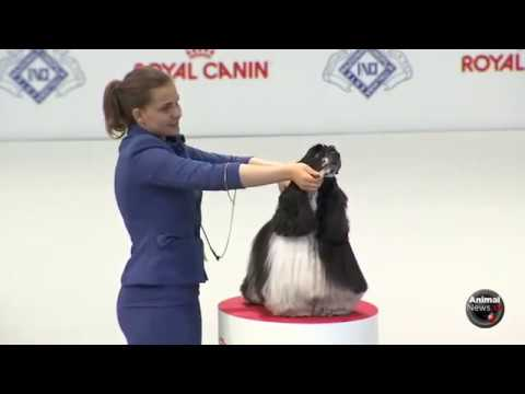 Twinkie, new Guinness World Record Balloon Popping Dog