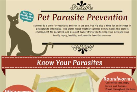 Home Remedies For Tapeworms In Cats - HRF