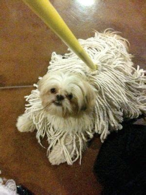 12 Dogs Who Blend In a Little Too Much [CRAZY] | Dog
