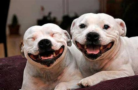 13 Smiling Pitties That Are Ecstatic This Town Lifted A